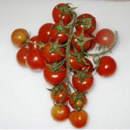 Pomodorini cherry